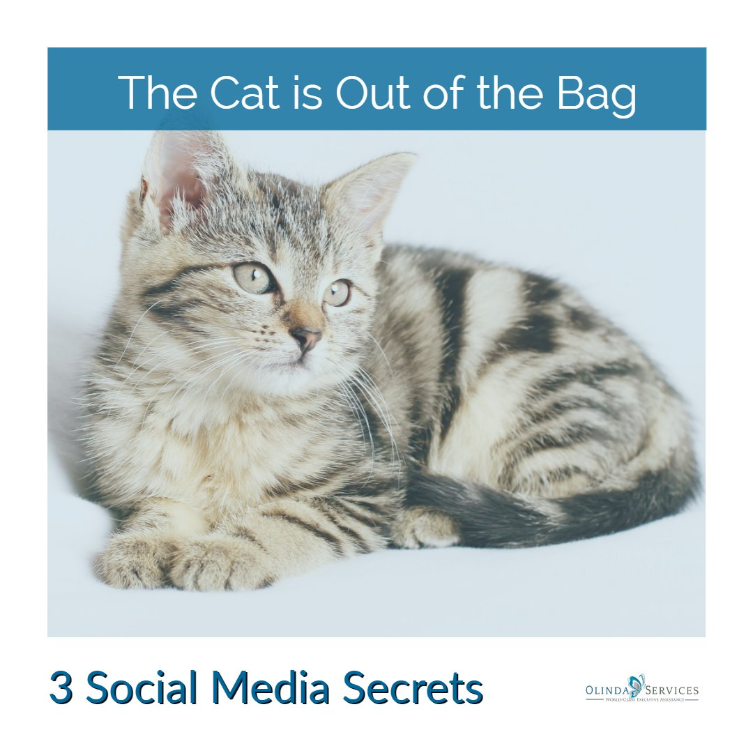 3 Must Know Secrets For Getting More From Social Media